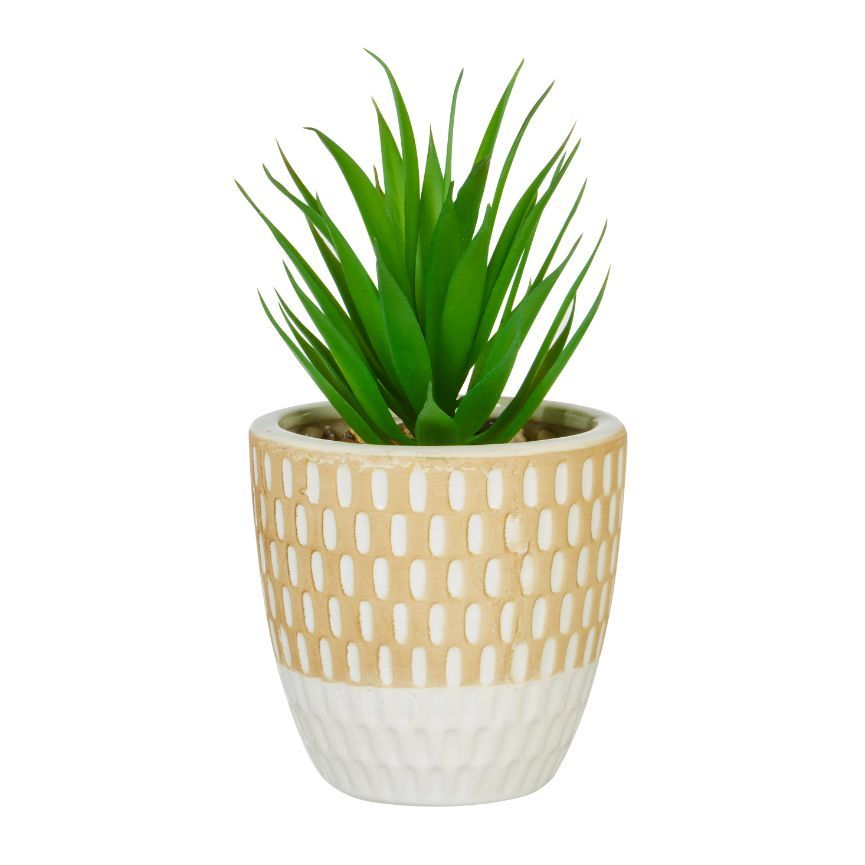 TrueLiving Outdoors Decorative Potted Succulent - Assorted
